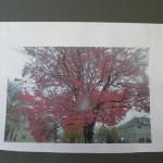 tree_photo